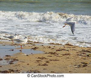 Seagulls on the coast of Black sea