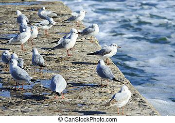 Seagulls on the pier