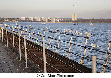 Seagulls on the Pier at Hythe in Southampton, UK
