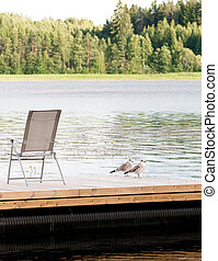 seagulls on the pier beside the chaise longue