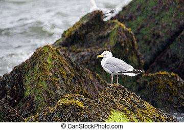 Seagulls on the pier - seagulls on the pier in Hoek van...