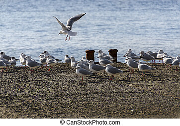 seagulls on the piers