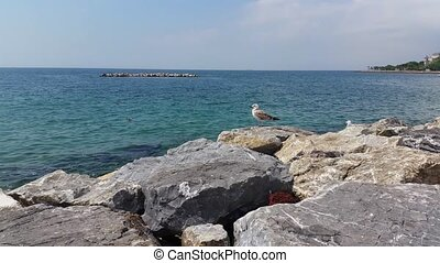Seagulls on the rocks near the sea