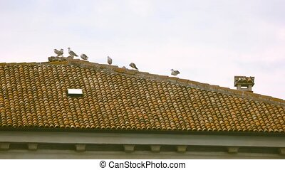 Seagulls on the roof. Building, birds and sky. The feathered...