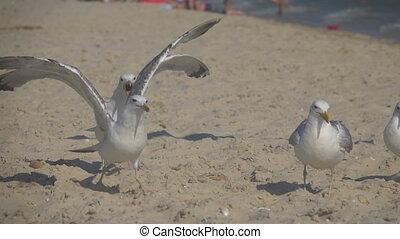Seagulls on the seashore. Slow Motion