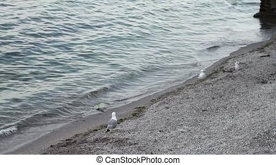 Seagulls on the shore of the Black Sea.