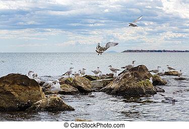 Seagulls on the stones