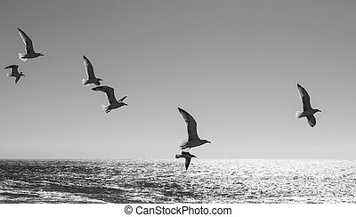 Seagulls over the Atlantic Ocean