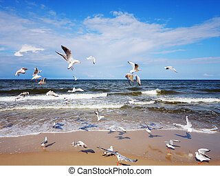 Seagulls over the sea waves