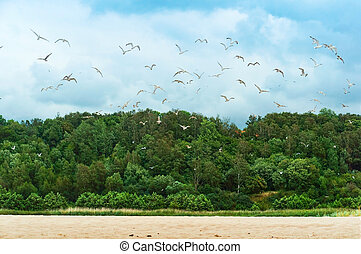 seagulls over the shore, a flock of seagulls on the coast