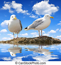 Seagulls reflection on water level