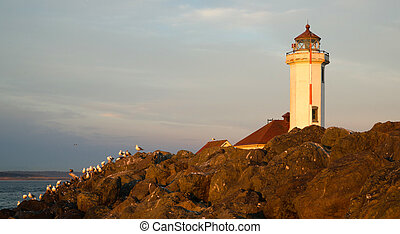 Seagulls Rest Shorebirds Rock Barrier Point Wilson Lighthouse