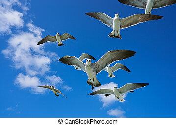 Seagulls sea gulls flying on blue sky