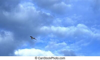 Seagulls silhouettes of grey colour fly against deep blue sky with dark clouds over ocean water on summer day low angle