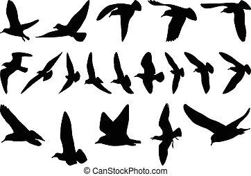 Seagulls silhouettes