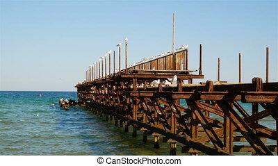 Seagulls sitting on pier. Sea pier with sea gulls at sunset....