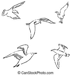 Seagulls sketch. Pencil drawing by hand. Vector