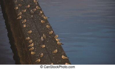 Seagulls sleep at night