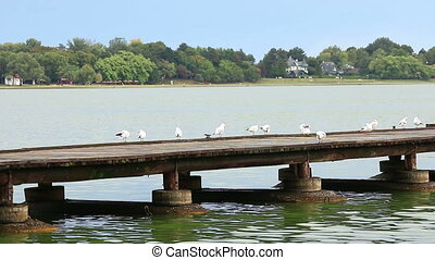 Seagulls stand on the pier