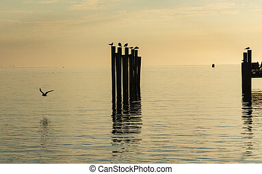 Seagulls standing on poles in the bay at sunrise
