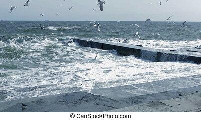 seagulls., tenger