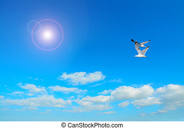 seagulls under the sun