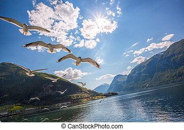 seagulls, vliegen over, fjord, dichtbij, de, flam, porto, in, noorwegen
