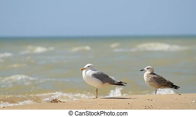 Seagulls walking in the sea