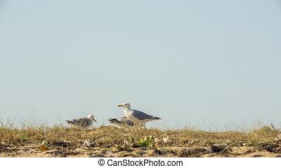 Seagulls Walking On the Ground