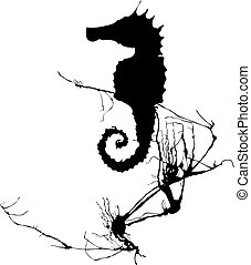 Shadow of a seahorse hiding in the seaweed.