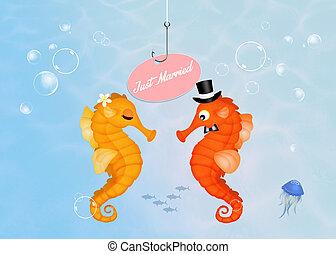seahorses, boda