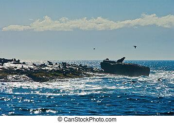 Seal calling