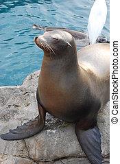 seal enjyoing the warm sun - a relaxing seal on rocks...
