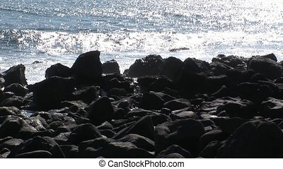 Seal lion relax on stones beach Galapagos. Cute mammals...