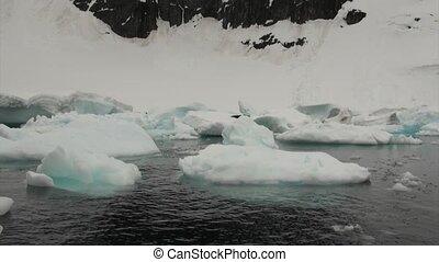 Seal on ice floe in ocean of Antarctica. Glacier on...
