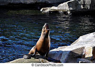 Seal sits on rocks by the pool.