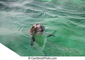 A seal in the Ecomare Pool in Texel