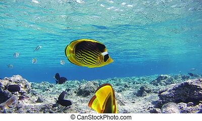 Sealife Background in the Red Sea, Egypt. Beautiful Colorful...