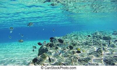 Sealife in the Red Sea, Egypt
