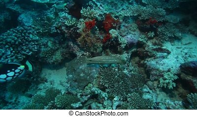 Sealife of Coral Reef - Shallow Water with Sealife of Coral...