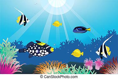 sealife tropical