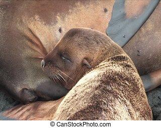 Sealion pups and mom, Galapagos Islands