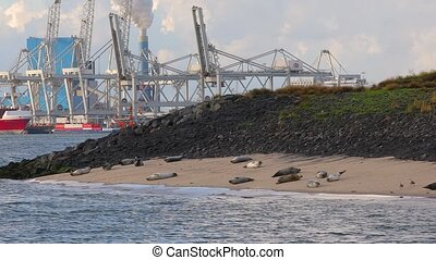 Seals in the port of Rotterdam