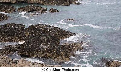 Seals on rocks coast of Cornwall - Seals resting on rocks...