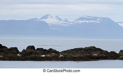 Seals on the shore - Beautiful steady long shot of seals on...