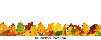 Seamless autumn oak leaves