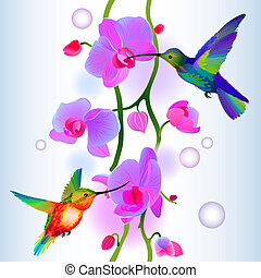 Vector seamless background with two rainbow humming-birds flitting around gentle branch of beautiful pink orchids