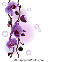 Seamless background with orchids branch
