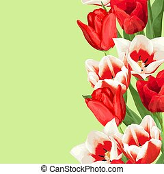 Seamless border with red and white tulips. Beautiful realistic flowers, buds and leaves