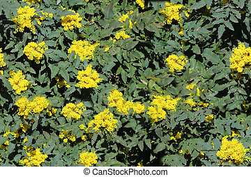 seamless bush texture with yellow flowers